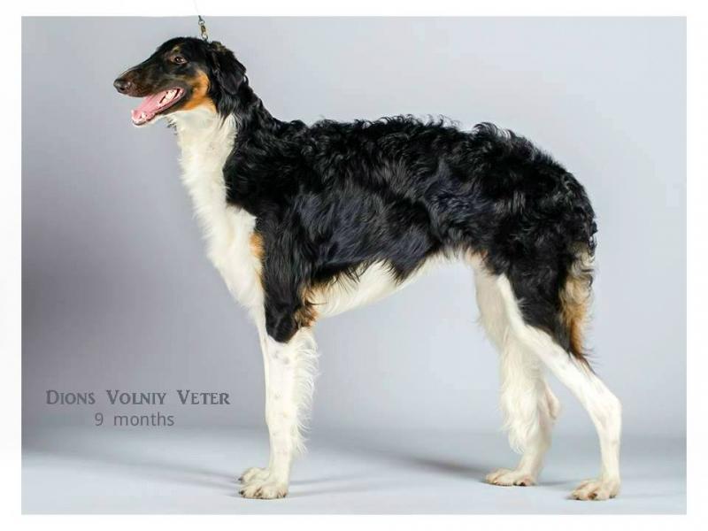 Dion's Volniy Veter