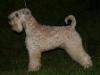 Dion\'s Wheaten Glenn 2009