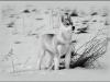 Dion\'s Arctic Lovely Laska